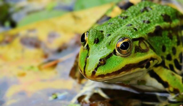 frog-richiamo-irraggiamento