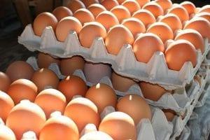 Uova Società Agricola CISAM contaminate da Fipronil